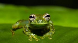 Costa Rica Josh Manring nature Photographer-0192 930x523