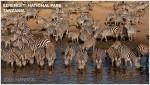 Banner Josh Manring Africa Excursions Serengeti National Park Tanzania 001