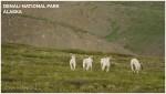 Banner Josh Manring Alaska Excursions Denali National Park 002