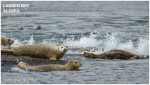 Banner Josh Manring Alaska Excursions Larsen Bay 001