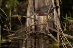 Josh Manring- the birds Everglades Exhibit-1
