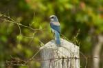 Josh Manring- the birds Everglades Exhibit-10