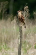 Josh Manring- the birds Everglades Exhibit-12