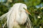 Josh Manring- the birds Everglades Exhibit-18