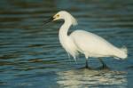 Josh Manring- the birds Everglades Exhibit-21