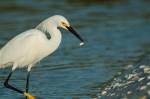 Josh Manring- the birds Everglades Exhibit-22