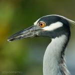 Josh Manring- the birds Everglades Exhibit-29