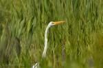 Josh Manring- the birds Everglades Exhibit-31