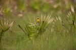 Josh Manring- the birds Everglades Exhibit-32