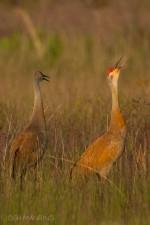 Josh Manring- the birds Everglades Exhibit-33