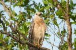 Josh Manring- the birds Everglades Exhibit-45