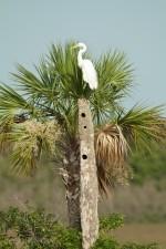 Josh Manring- the birds Everglades Exhibit-46