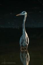 Josh Manring- the birds Everglades Exhibit-50