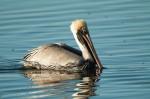 Josh Manring- the birds Everglades Exhibit-51