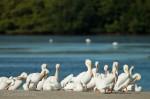 Josh Manring- the birds Everglades Exhibit-56