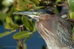 Josh Manring- the birds Everglades Exhibit-58