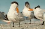 Josh Manring- the birds Everglades Exhibit-59