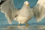 Josh Manring- the birds Everglades Exhibit-62