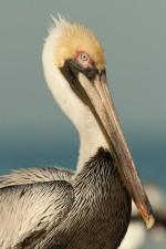 Josh Manring- the birds Everglades Exhibit-66