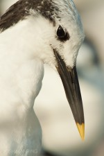 Josh Manring- the birds Everglades Exhibit-69