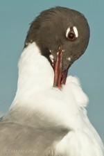 Josh Manring- the birds Everglades Exhibit-73