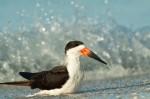 Josh Manring- the birds Everglades Exhibit-78
