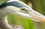 Josh Manring- the birds Everglades Exhibit-8