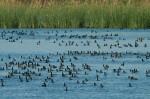 Josh Manring- the birds Everglades Exhibit-80