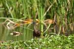 Josh Manring- the birds Everglades Exhibit-81