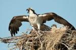 Josh Manring- the birds Everglades Exhibit-82