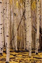 Josh Manrng-35MM - Exhibit-55