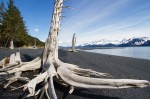 Josh Manrng- Fragmented Frontier Alaska -  Exhibit-3