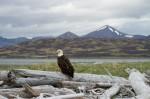 Josh Manrng- Fragmented Frontier Alaska -  Exhibit-49