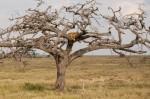 Josh Manrng-Under an African Sky- Exhibit-24