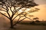 Josh Manrng-Under an African Sky- Exhibit-25