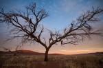 Josh Manrng-Under an African Sky- Exhibit-9