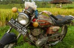 Josh Manrng- organized chaos - Southeastern Asia Exhibit-197