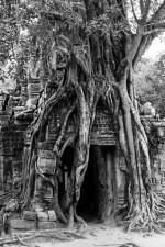 Josh Manrng- organized chaos - Southeastern Asia Exhibit-48